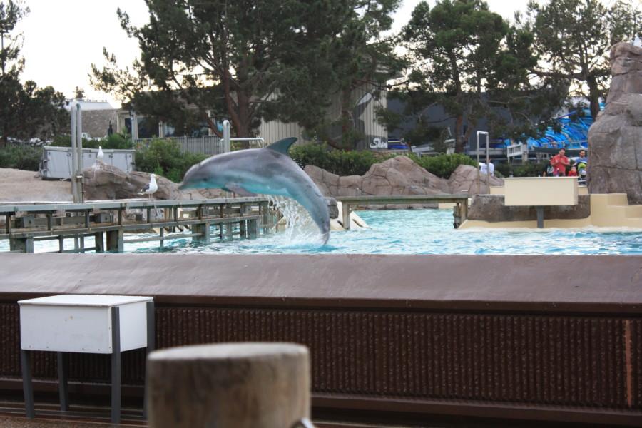 Dolphin Seaworld SanDiego