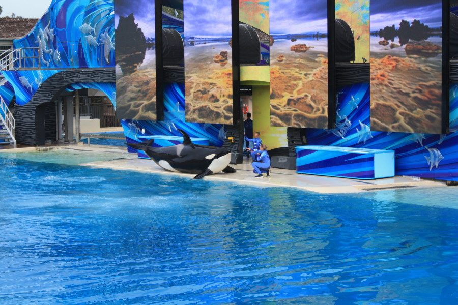 Look at the adorable Shamu!