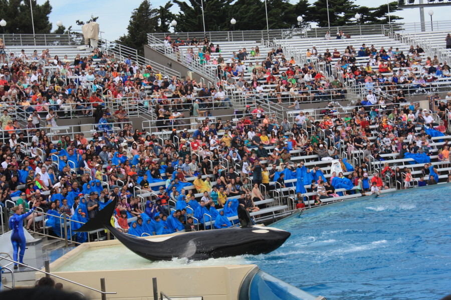 Be prepared, Shamu is gonna get them all wet!
