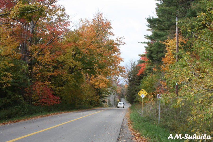Toronto Fall 2012 – Caledon